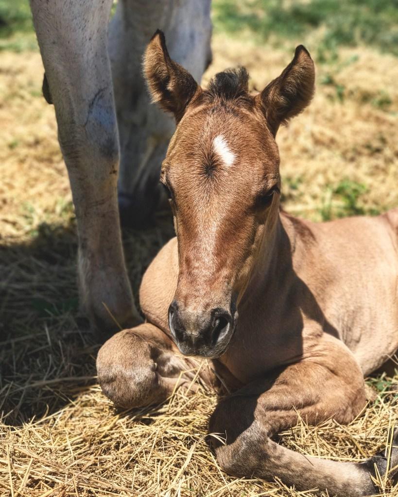 hawk, babies, foal, the south dakota cowgirl