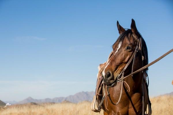 taffy, the wonder horse