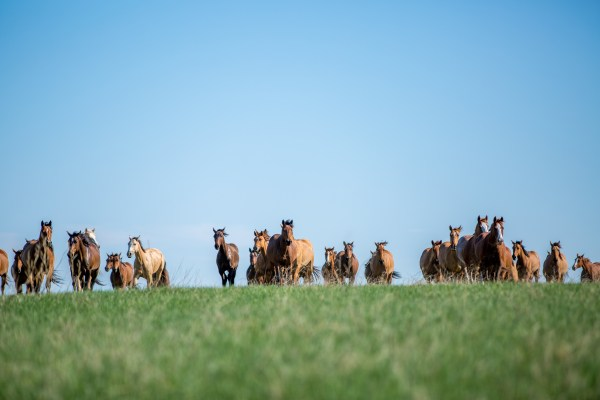The DX Ranch Mare Herd