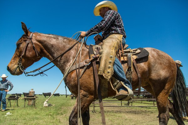 branding season, cowboy, ranching, south dakota cowgirl photography