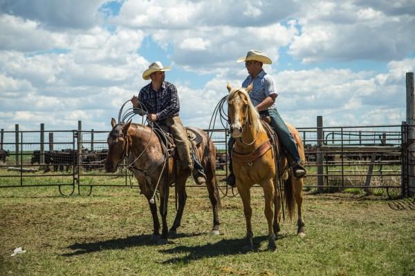 branding season, cowboy, ranching, south dakota cowgirl photography