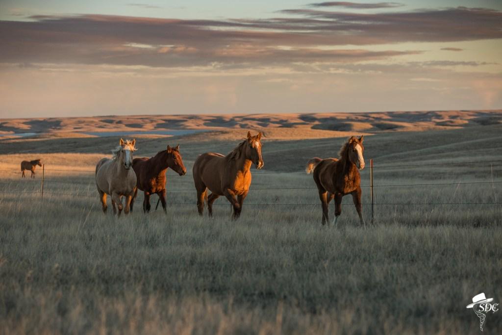 2019 South Dakota Cowgirl Calendar, South Dakota Cowgirl Photography, horses, horses at sunset, ranch horses