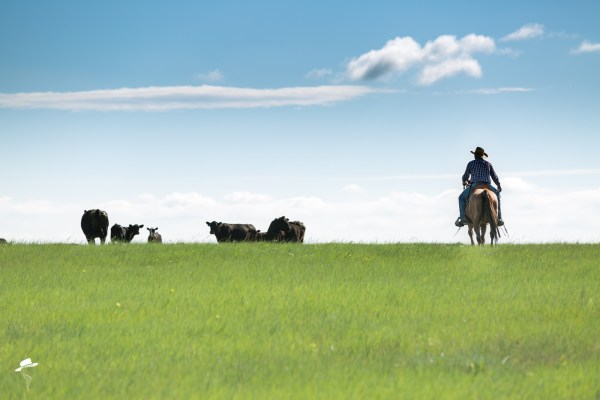 branding photos, south dakota cowgirl photography