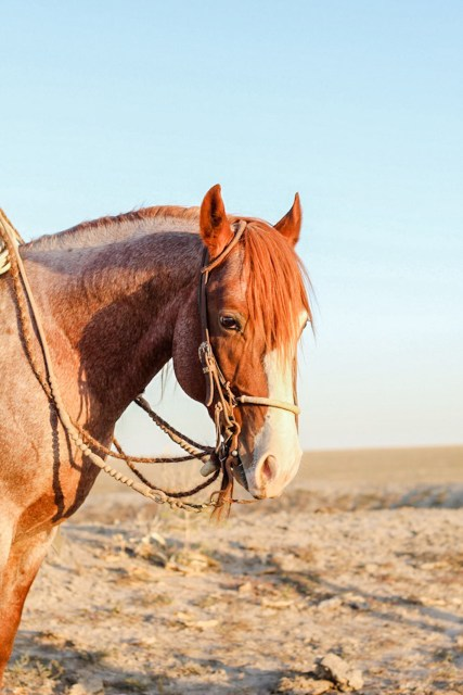 caroline arendt, south dakota cowgirl photography workshop, perry quarter horses, jason perry