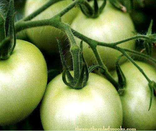 Tips on Fall Green Tomatoes