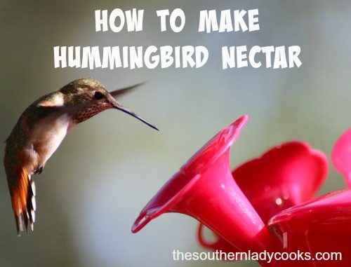 photo about Printable Hummingbird Nectar Recipe identify HUMMINGBIRD NECTAR-Create Your Personal-The Southern Woman Chefs