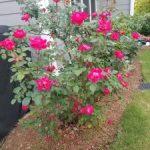 KAYGO Gardening Gloves $9.98 – Great Gift Idea