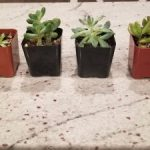 Succulents Box – $5 off Promo Code + My Review