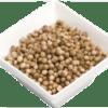 dried round coriander seeds
