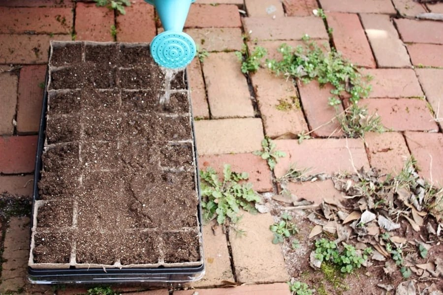How to start your first vegetable garden: easy step by step instructions with pictures to help you begin eating your very own home grown vegetables! | via The Spirited Violet