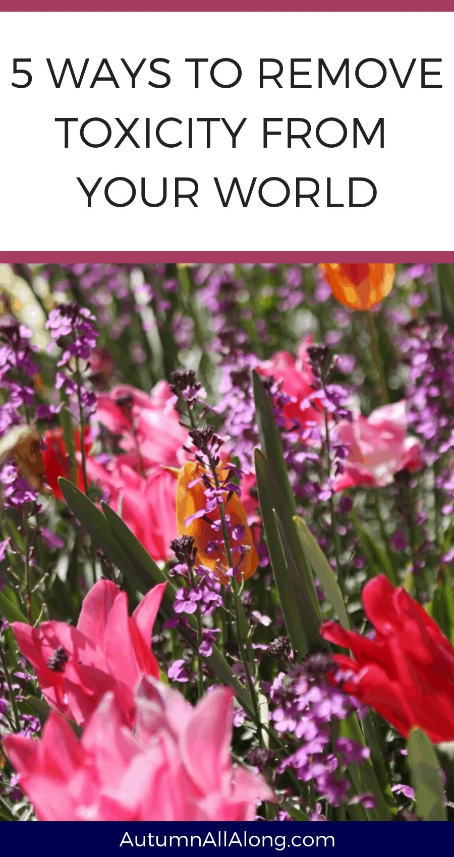 5 ways to remove toxicity from your world | via The Spirited Violet