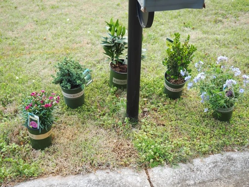 This is the planning process of my mailbox garden. It really makes a big difference at the end! | via The Spirited Violet