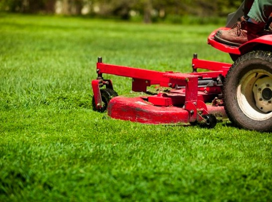Basic Lawn Care Tips
