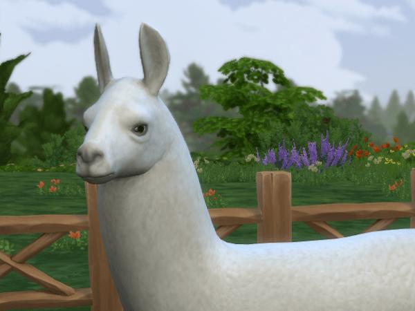Sims 4 Country Living llama