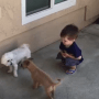 A Boy And Some Dogs