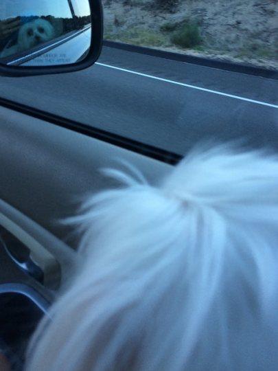 rigby enjoys the drive