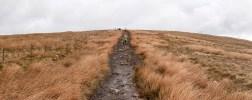 Long path ahead