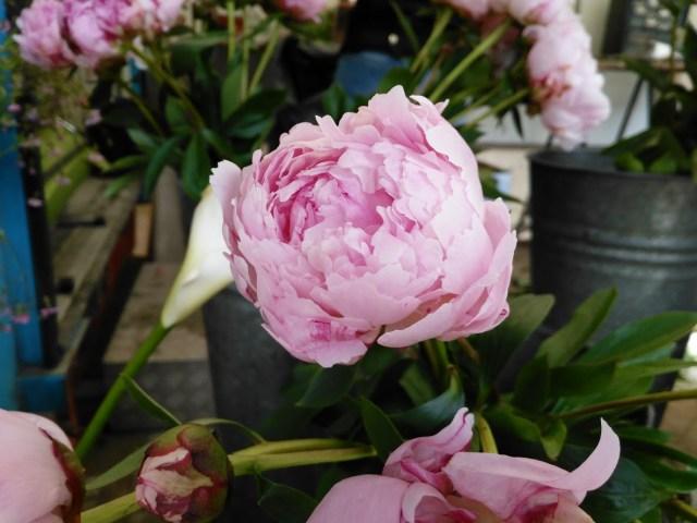 Image of a flower at Gent's Flower Market