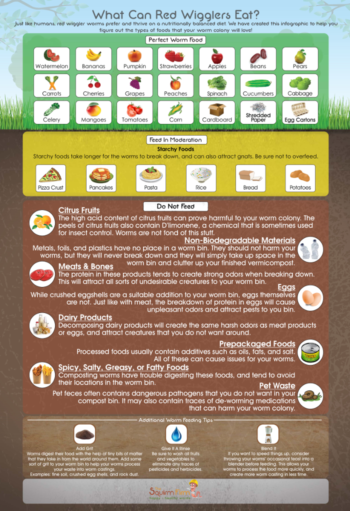 What Can Red Wiggler Worms Eat Infographic