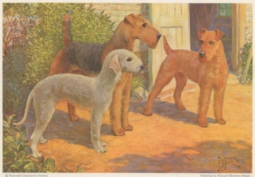 Terriers2