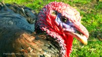 2014-03-29 turkey