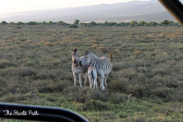 Addo Elephant Park Safari
