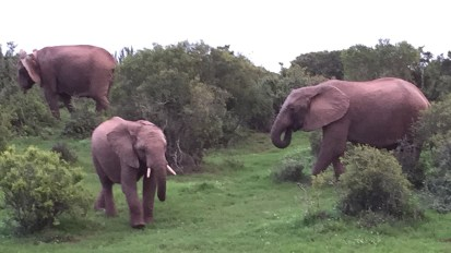 Chasing elephants in a South African game park