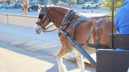 Horse-drawn carriages in Charleston