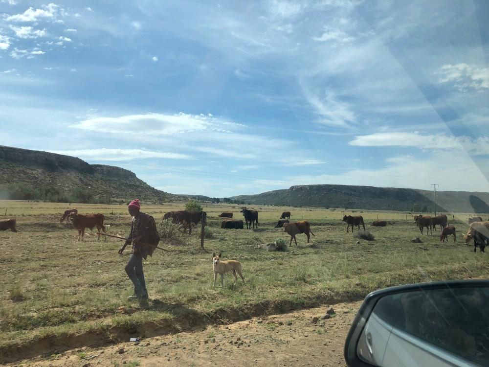 Lesotho Herder