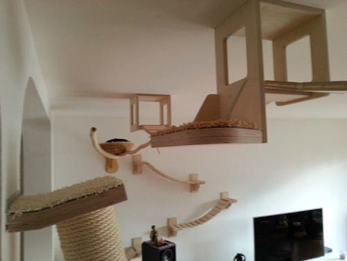 Ceiling And Wall Mounted Cat Furniture Petopia