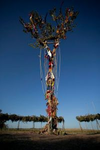 Sun Dance - Tree of Life
