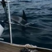 British couple film moment pod of killer whales attacks their 45ft yacht off the Spanish coast