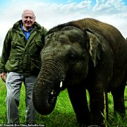 Sir David Attenborough is pictured with a young elephant.I feel I must bear witness not only to the wonders I have seen, but to the devastation that has occurred in my lifetime – whole ecosystems destroyed, habitats swallowed up by farming and living space as populations grow, species all but wiped out