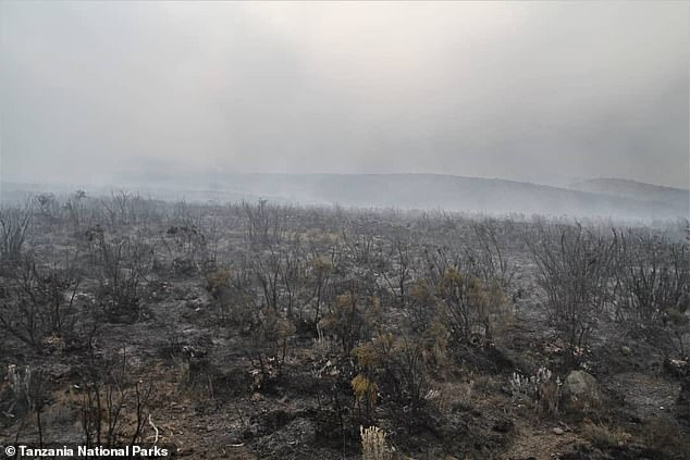 Vegetation was reduced to cinders after the fire swept over large swathes of the mountainside, with smoke obscuring the view