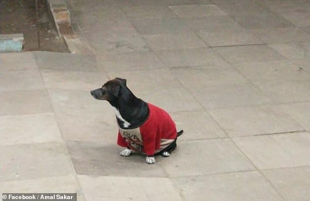 The small dog waited outside the hospital doors in anticipation for her owner's return