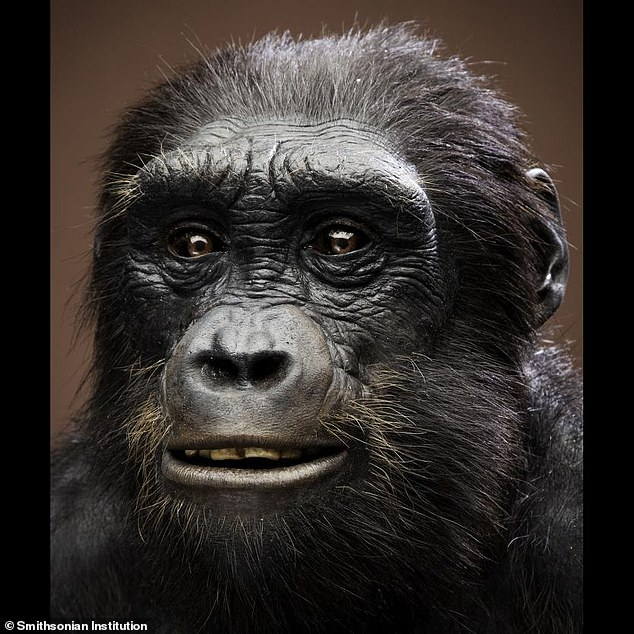 A rendering of what Sahelanthropus tchadensis may have looked like when it was alive