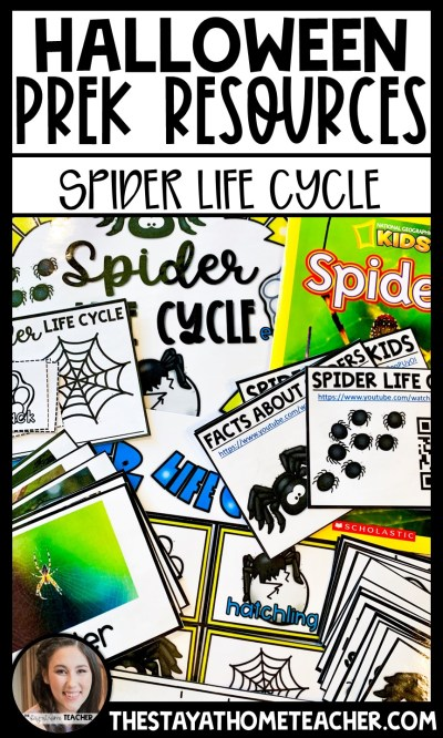 spider life cycle study