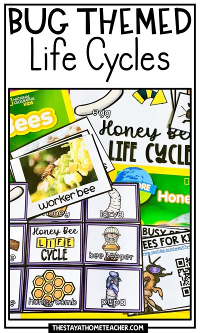 Bug Life Cycles pin