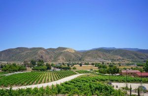 Temecula Vacation Rentals
