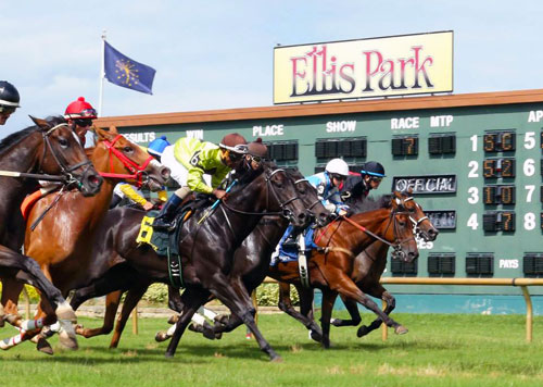 ellis_park_turf_stock