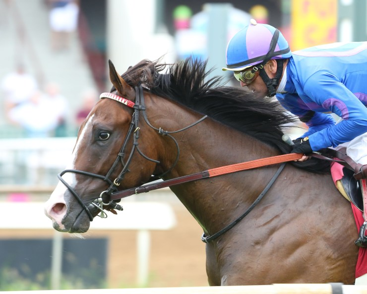 major_munnings_horse_coady