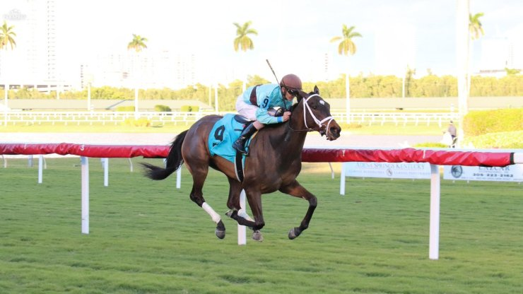 hard_legacy_gulfstream_park_photo