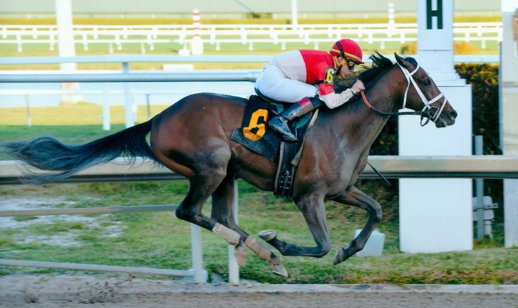 bourbon_war_gulfstream_park_photo