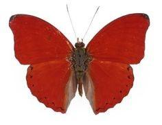 Red Glider Butterfly Bronze Key Necklace
