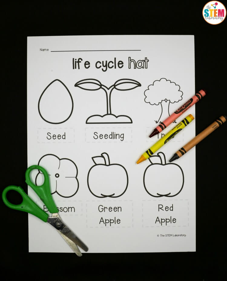 Apple Life Cycle Hat The Stem Laboratory