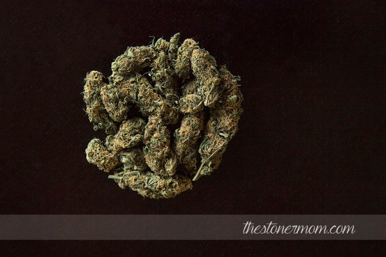 Hybrid Cannabis strain: Golden Goat