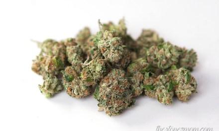 Marijuana Strain Review- Lost Tribe