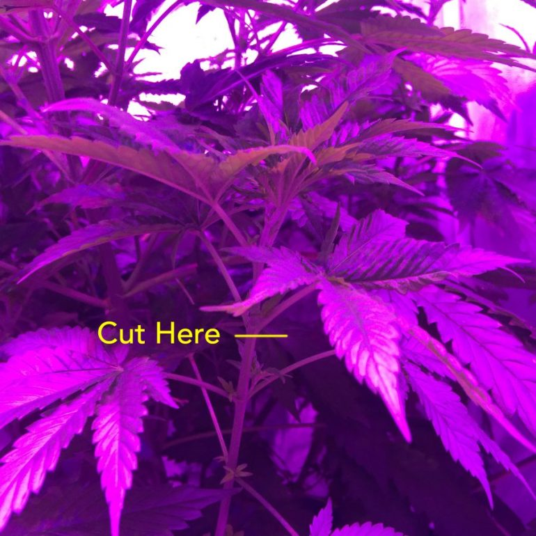 Seeds and Cloning