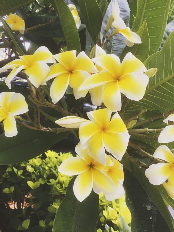 Hawaii_1ew