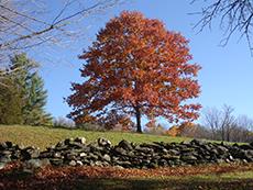 Historic Field Wall